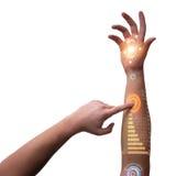 Den mänskliga robotic handen i futuristiskt begrepp Arkivbild
