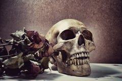 Den mänskliga skallen och torkar rosa väntande på förälskelse Royaltyfri Foto
