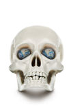 Den mänskliga skallen som isoleras på vit bakgrund. Royaltyfri Fotografi