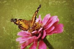 Den målade damen Butterfly tänder på en zinnia i ett antiqued fotografi arkivbild