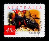 Den målade Firetail Emblema pictaen, natur av Australien - desertera fågelserie, circa 2001 Royaltyfri Bild