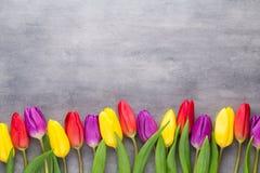 Den mångfärgade våren blommar, tulpan på en grå bakgrund arkivfoto