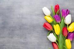 Den mångfärgade våren blommar, tulpan på en grå bakgrund arkivbilder