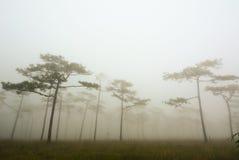 Den mörka dimmiga skogen med sörjer träd i morgon Arkivbilder