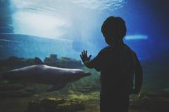 Den mörka konturn av pojken framme av ett stort akvarium med en delfin i det blåa vattnet arkivfoto