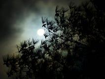 Den mörka molniga fullmånen sörjer trädet Arkivfoto