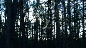 Den mörka skogen arkivfilmer