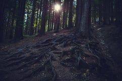 Den mörka skogen och den glänsande solen royaltyfri bild
