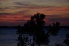 Den mörka solnedgången sörjer igenom trädkonturn på sjön Royaltyfri Foto