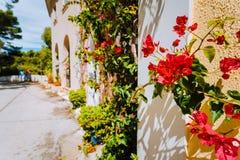 Den magentafärgade fuchsian blommar på gångbanan i den lilla medelhavs- Assos byn Traditionellt grekiskt hus på gatan med a fotografering för bildbyråer