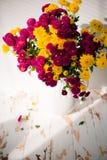 Den magentafärgade och gula krysantemumet blommar i vas Royaltyfria Foton