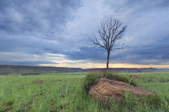 Den magiska solnedgången i Afrika med ett ensamt träd på kullen och fördunklar thin royaltyfria foton
