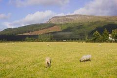 Den majestätiska Binevenagh bergtoppmötet nära Limavady i ståndsmässiga Londonderry på norrkusten av nordligt - Irland Royaltyfria Bilder