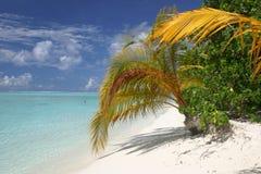 Den Maledives ön gömma i handflatan Palme Royaltyfria Bilder