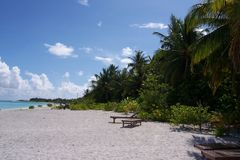 Den Maledives ön gömma i handflatan Palme Royaltyfri Foto