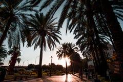 Den Mallorca ön är det störst av Balearicen Island Royaltyfri Foto