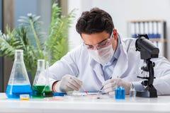 Den manliga doktorn som arbetar i labbet på virusvaccin Arkivfoto