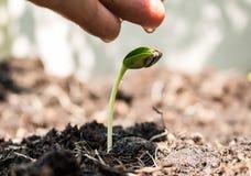 Den manliga handen som bevattnar det unga trädet över gräsplan, kärnar ur Royaltyfri Foto