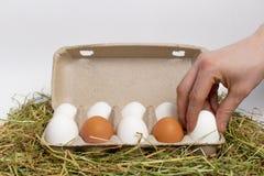 Den manliga handen tar ägget ut ur asken av ägg på hö isolate arkivbild