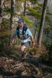 Den manliga löparen går stigande till och med pinjeskog Royaltyfri Bild