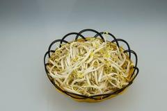 Den manuella lilla korgen, satte böngroddbönan Royaltyfri Fotografi