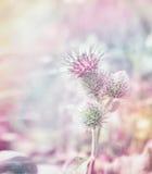 Den Mary tisteln blommar på pastell tonad suddig bakgrund Royaltyfria Bilder