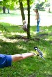 Den matande fågeln på gömma i handflatan arkivfoton