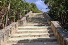 Den Mayan tempeltrappan up observation Arkivbilder