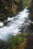 Den McKenzie floden i kaskadbergen forsar nedströms från den Sahalie vattenfallet royaltyfria foton