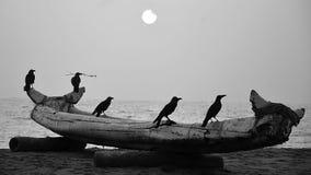 Den med fåglarna royaltyfri fotografi