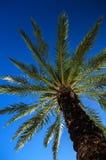 den medelhavs- corsica ön gömma i handflatan den fotografi tagna treen Arkivbilder
