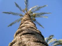den medelhavs- corsica ön gömma i handflatan den fotografi tagna treen royaltyfri foto