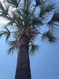 den medelhavs- corsica ön gömma i handflatan den fotografi tagna treen Arkivfoto