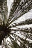 den medelhavs- corsica ön gömma i handflatan den fotografi tagna treen royaltyfria foton