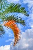 den medelhavs- corsica ön gömma i handflatan den fotografi tagna treen Arkivfoton
