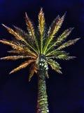 den medelhavs- corsica ön gömma i handflatan den fotografi tagna treen royaltyfri bild