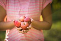 Den mellersta åldriga kvinnan som väljer äpplen i hennes fruktträdgård är dåligt, en älskvärd lukt av äppelpajen i hennes tonade  royaltyfri bild