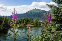 Den Mendenhall glaciären parkerar, Juneau, Alaska Fotografering för Bildbyråer