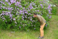 Den mer unga mannen sniffar och undersöker buskarna av ett blomstra l Arkivfoto