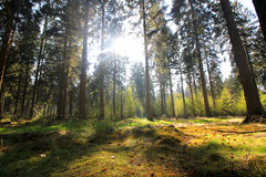 Den mest forrest gräsplanen Fotografering för Bildbyråer