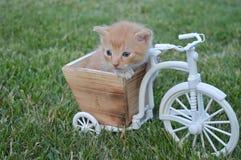 Den mest söta katten behandla som ett barn att spela på en bicicle Arkivbild