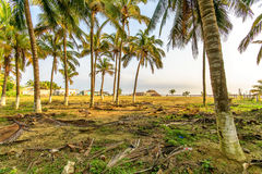 Den mexicanska kokosnöten gömma i handflatan Royaltyfria Bilder