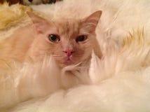 Den min kattkyzmaen Arkivfoto