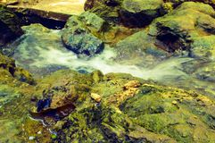 den mini- floden på gräsplan vaggar Arkivfoton