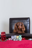 Den mini- taxen poserar framme av pokerchiper Royaltyfria Bilder