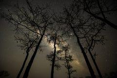 Den mjölkaktiga vägen över träd i skog arkivbild