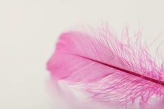 Den mjuka fjädern på ljus bakgrund för din design, rosa färg färgar royaltyfri foto