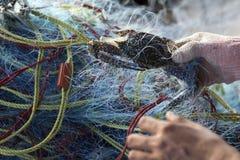 Den mjuka fokusen av fiskarehänder tar den blåa simma krabban av fishin arkivfoto