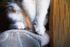 Den mjuka katten tafsar Katten sitter och ser ut fönstret i förväntan arkivbild