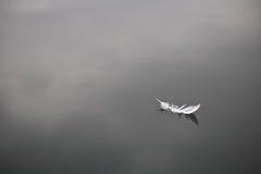 Den mjuka vita fågelfjädern isolerade att sväva på lugnt vattensjöbakgrund Fotografering för Bildbyråer